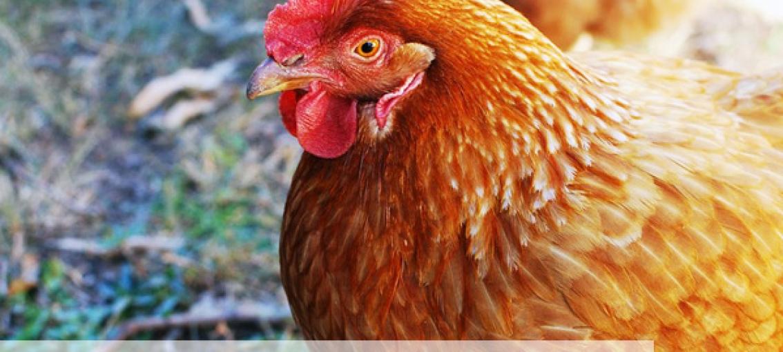 Le Groupe Pierre Martinet s'engage en faveur du bien-être animal